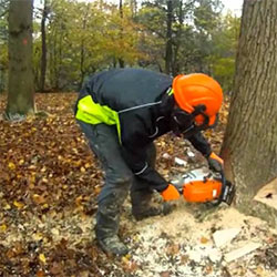 Treewerx - tree felling