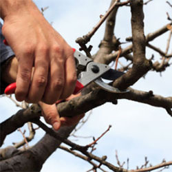 Treewerx - tree pruning