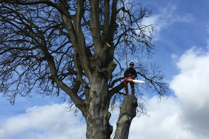 Tree Surgeons Welshpool
