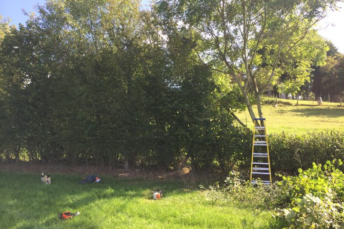 Treewerx – All aspects of tree work undertaken 07722 446664