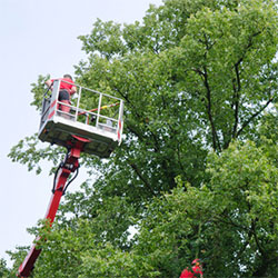 Treewerx - crown reduction and maintenance