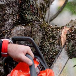 Treewerx - dead wooding