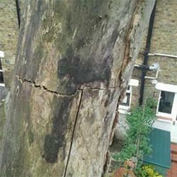 Treewerx - emergency treework
