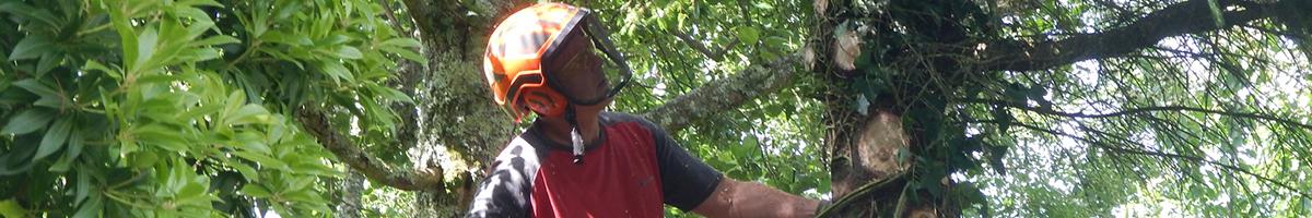 Treewerx - All aspects of tree work undertaken 07722 446664