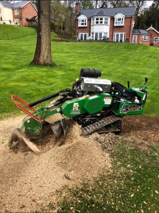 Treewerx – All aspects of tree work undertaken 07722 446664